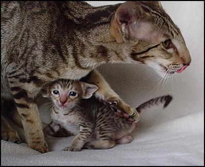 Mom & kitten